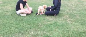 puppy class