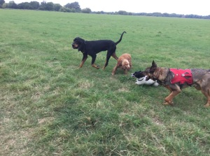 dog walking st neots