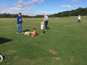 puppy classes huntingdon
