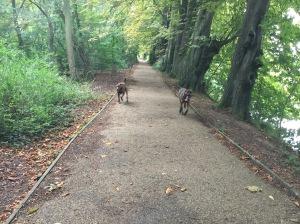 dog walking cambridgeshire