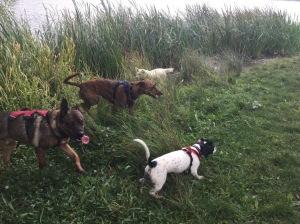 dog behaviour cambridgeshire