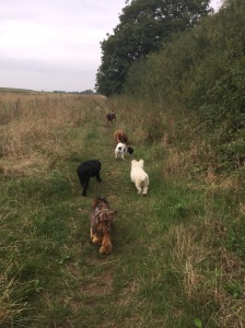 dog trainng huntingdon