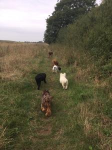 dog trainng huntingdon