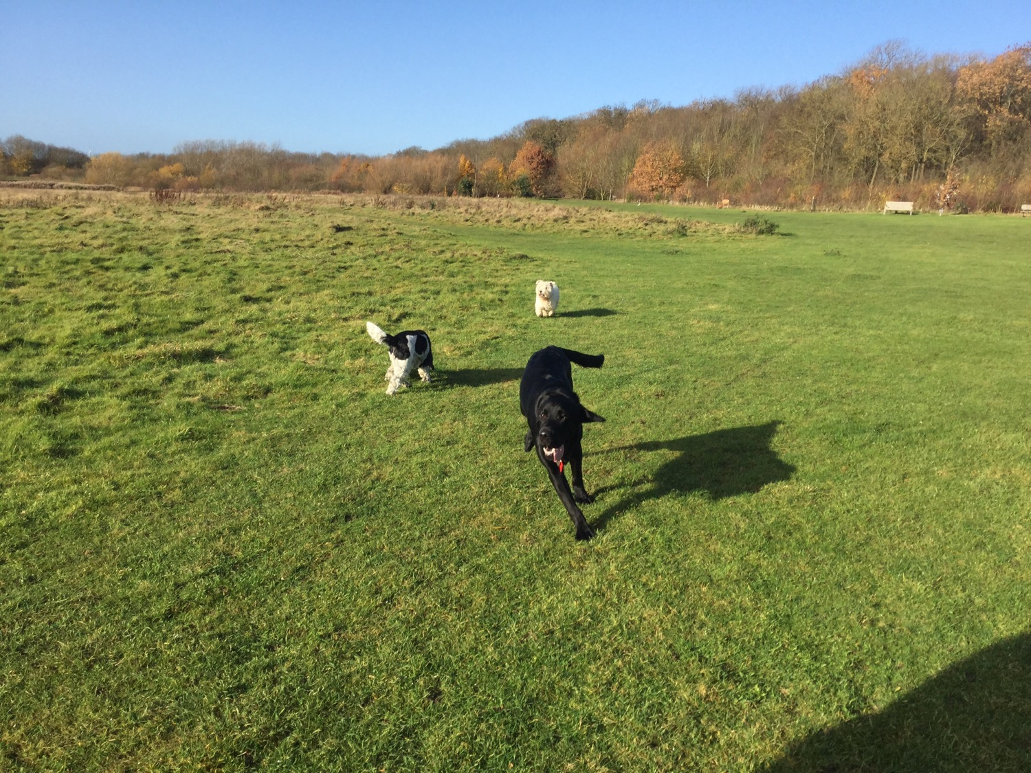 Dog classes Huntingdon