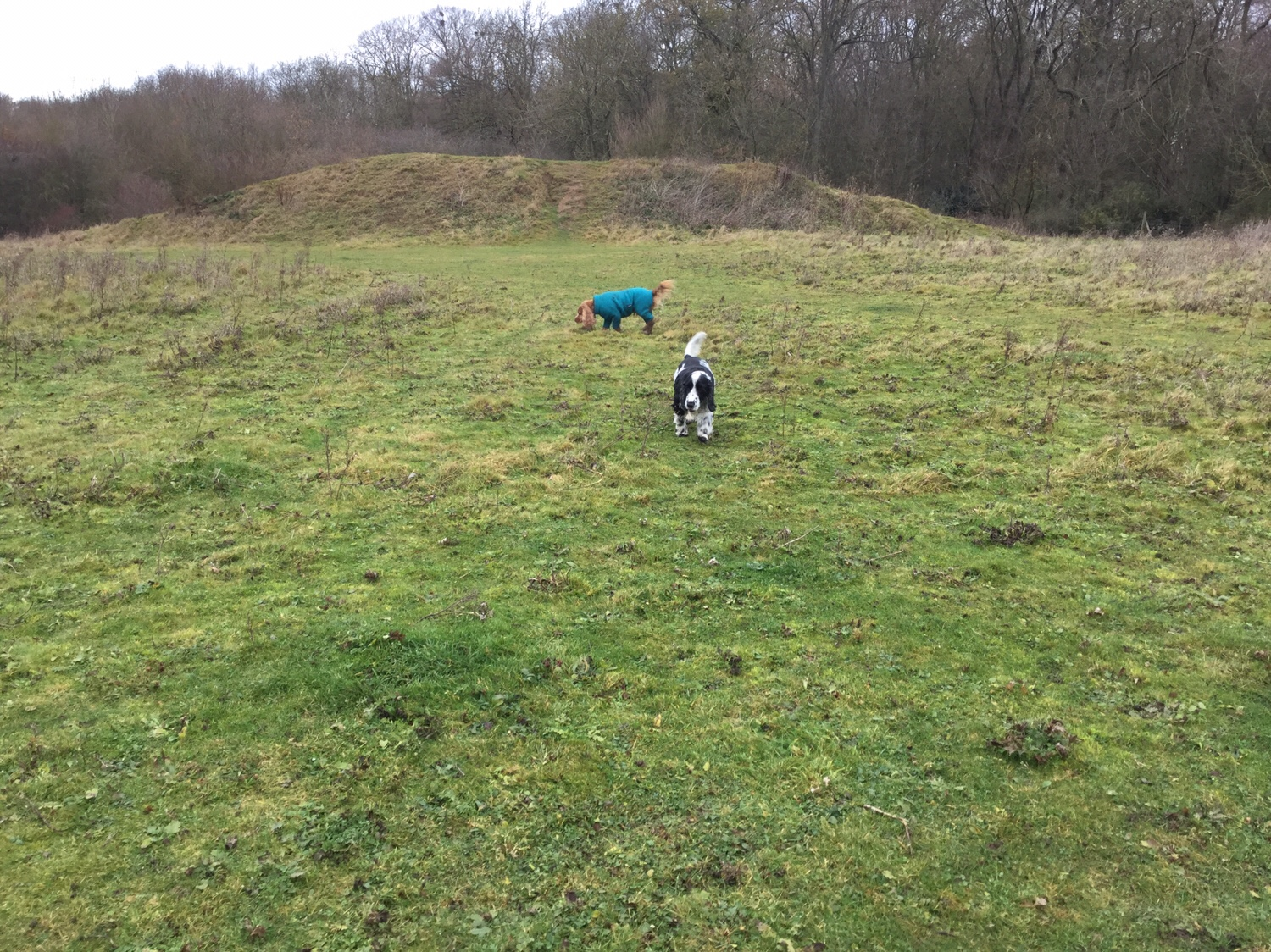 Dog socialisation Cambridgeshire