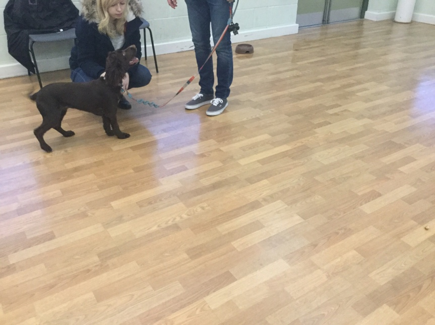 Advanced dog classes Huntingdon