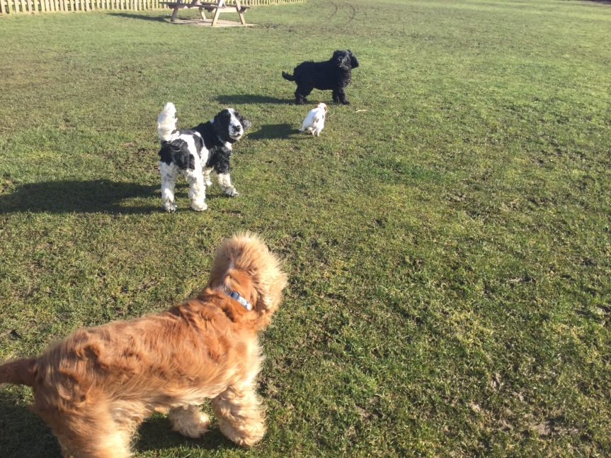 Socialisation walks Cambridgeshire