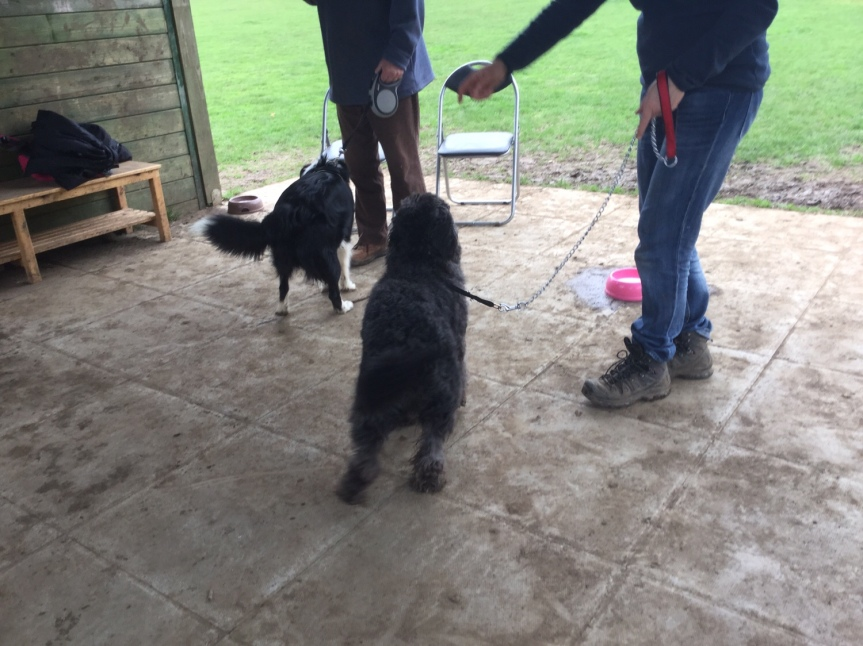 Advanced dog training Cambridgeshire