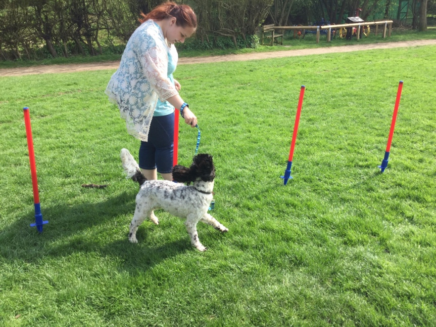 Rolling dog classes Huntingdon