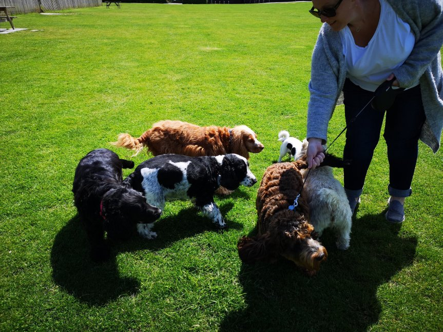 Dog socialisation walks in Huntingdon
