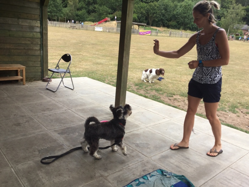 Advanced dog training Huntingdon