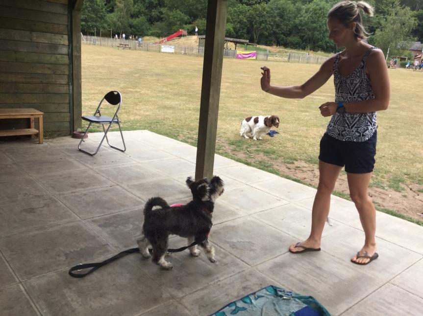 Advanced dog training Huntingdon