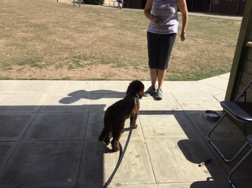 Advanced dog training classes Cambridgeshire