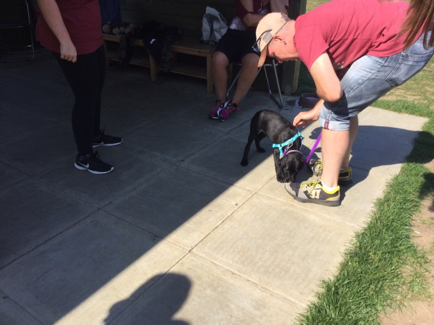 Puppy training classes Huntingdon