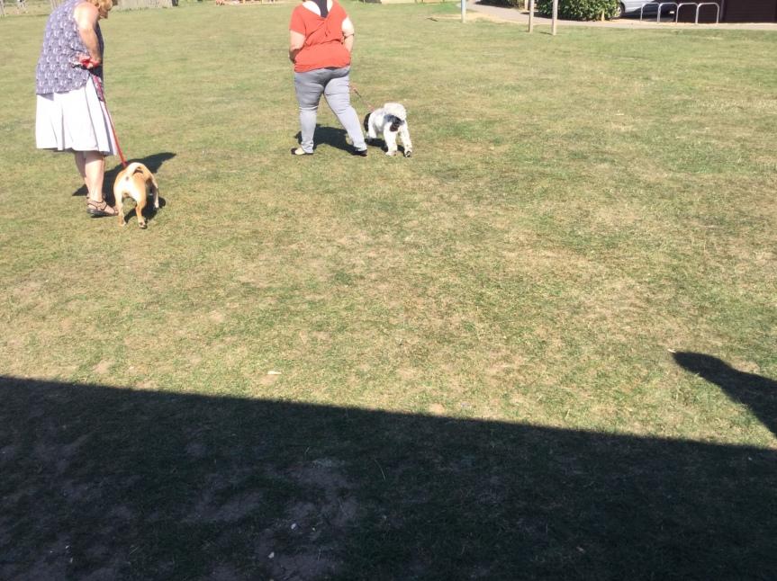Dog training Huntingdon