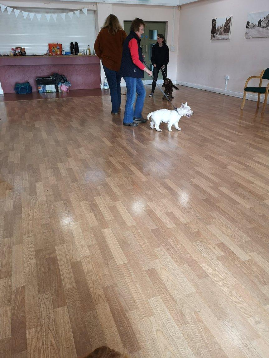 Rolling dog training classes Huntingdon