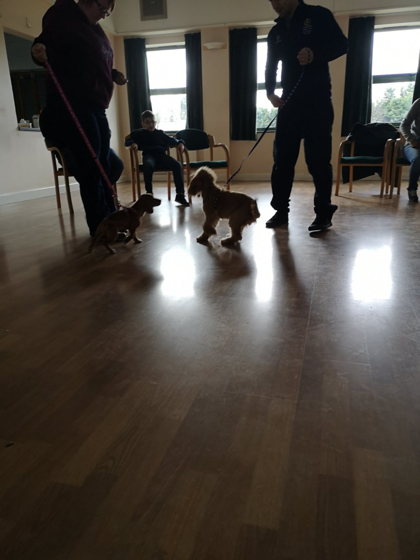 Dog training classes Cambridgeshire