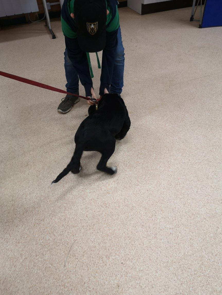 Puppy classes Huntingdon